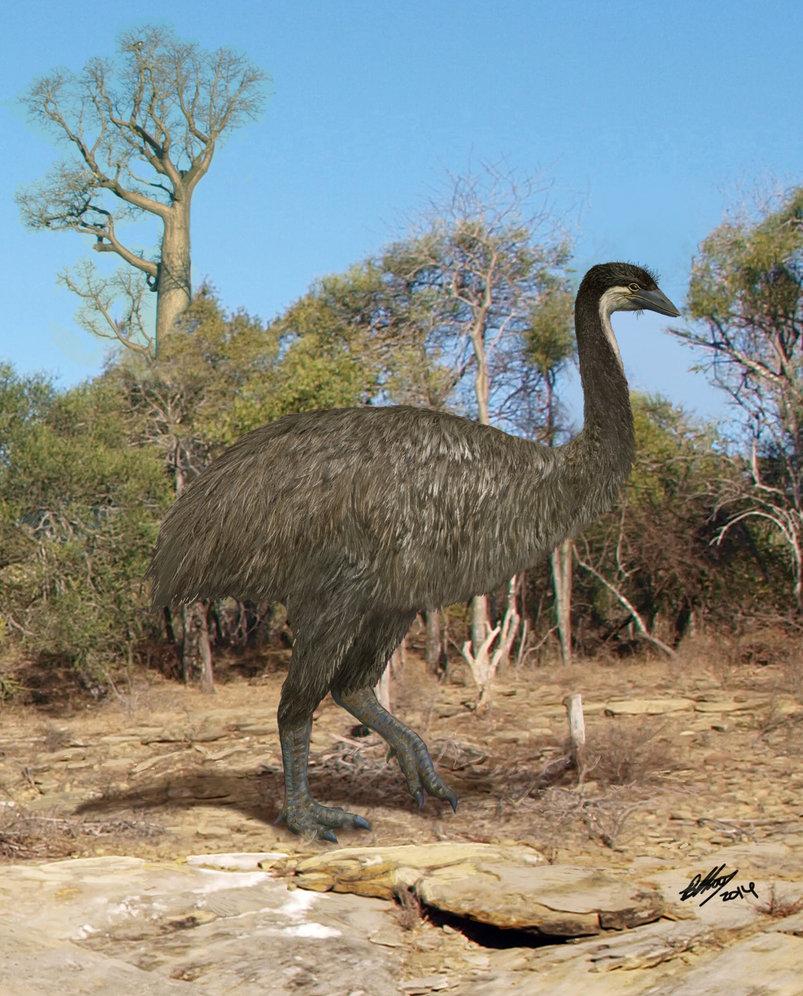 elephant_bird___the_kiwi_s_lost_cousin_by_gogosardina-d7jdkis