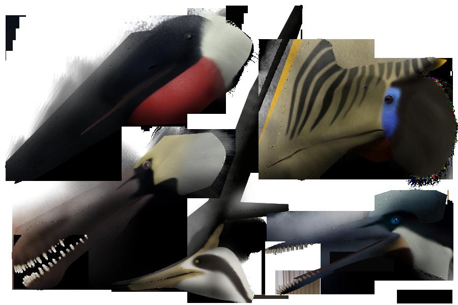 Resultado de imagem para pterosaur diversity