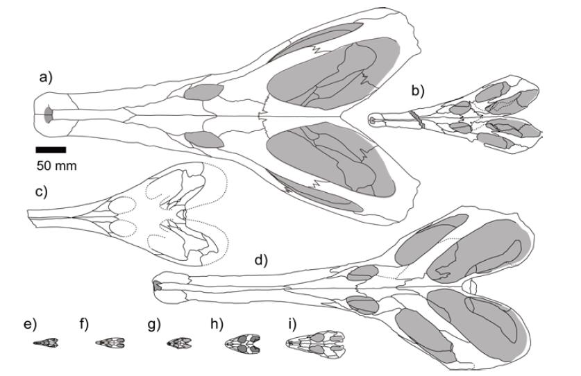 choristodera