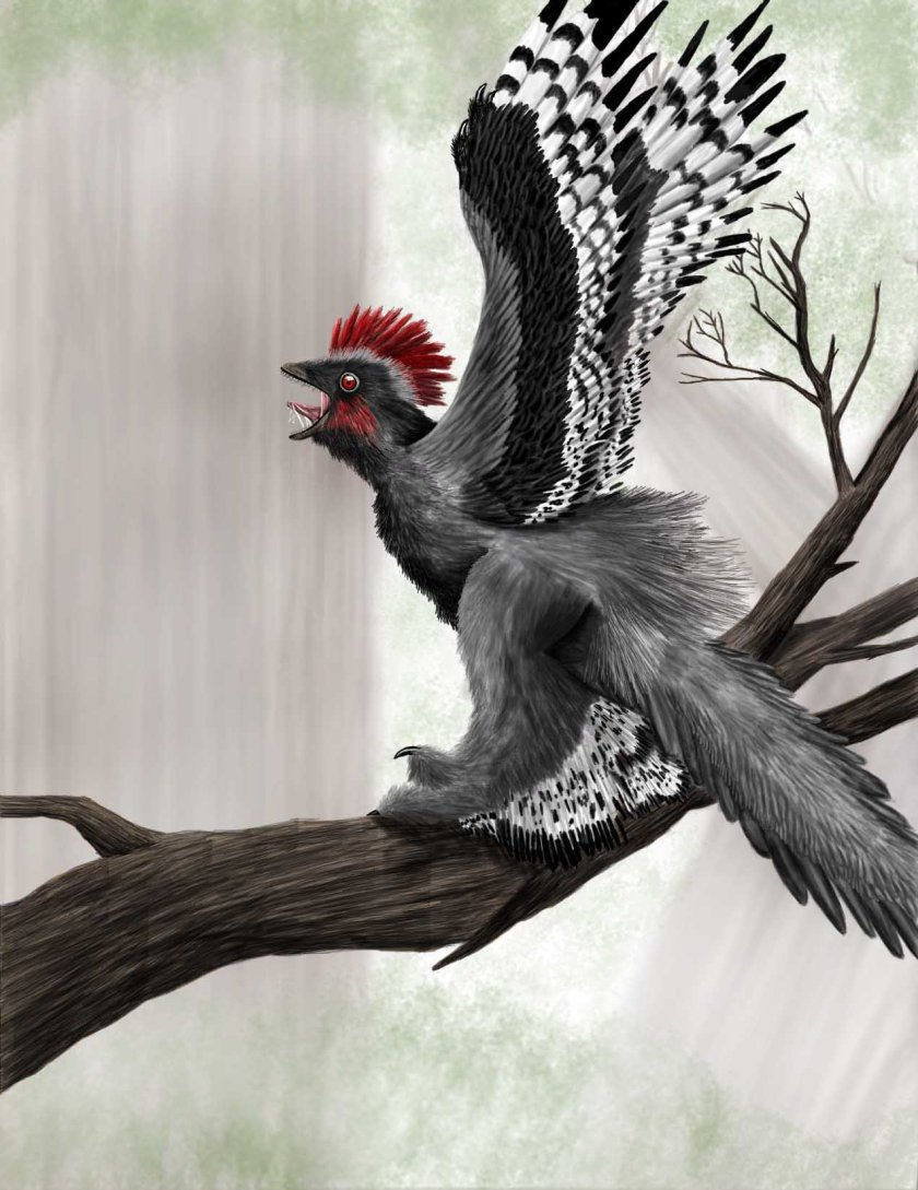 Achiornis by Vasika Yasanjith Udurawane. While it's unlikely that Anchiornis raised it's forelimbs that high, morphological studies on alligators, as well as the numerous critiques to Senter's works, show that maniraptors could probably raise their forelimbs somewhat higher than previously thought.