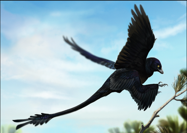 Microraptor by mangycoyote, flying to a perching spot.