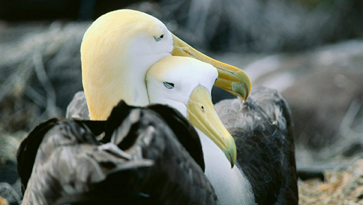 At the very least 30% of albatross couples are female/female. When was the last time you heard people talking about similar percentages in pseudodontorns?