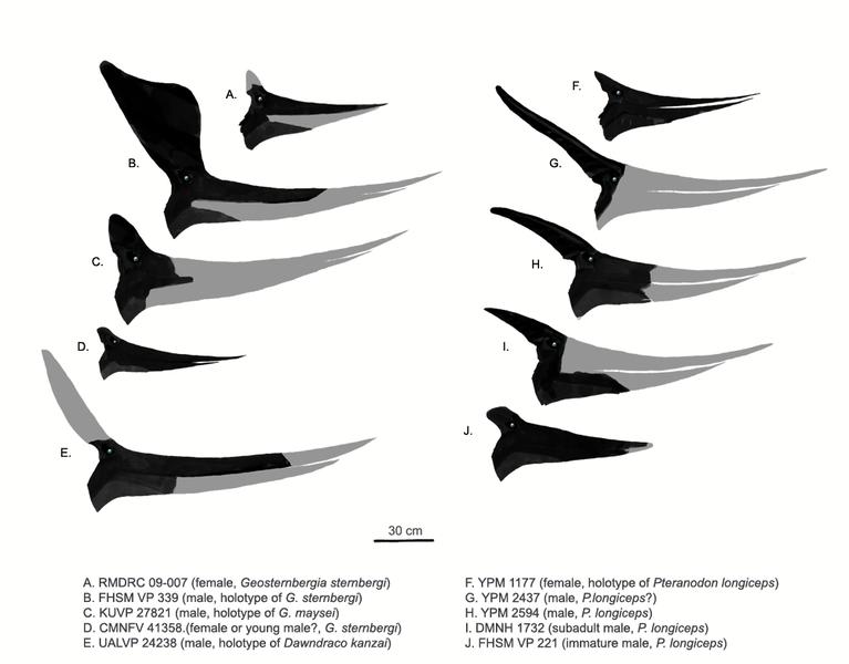 American Pteranodontidae by Matt Martyniuk.