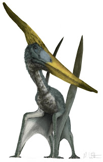 Pteranodon longiceps by Mark Witton. without the person attached.