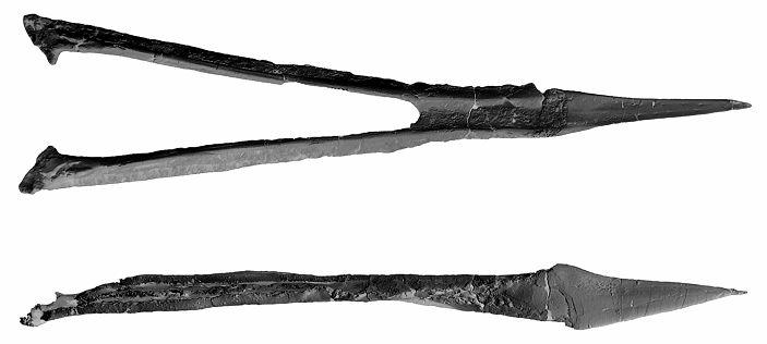 The holotype, MTM Gyn/3