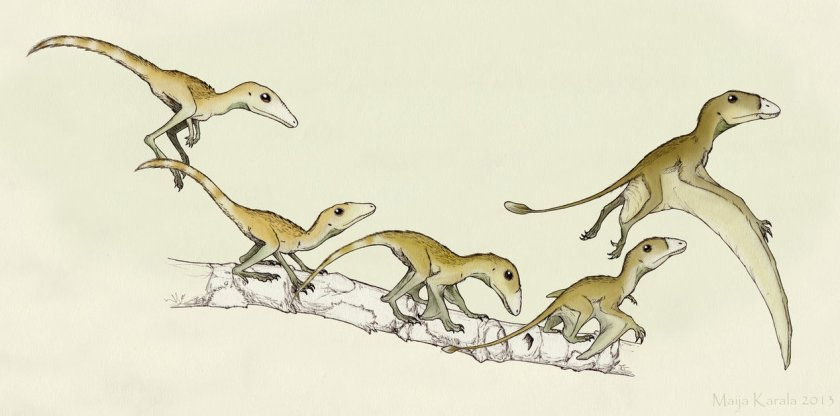 A series of Hypothetical Pterosaur Ancestors (HYPTAS) by Maija Karala (Eurwentala), in turn inspired by Mark Witton's own HYPTAS.