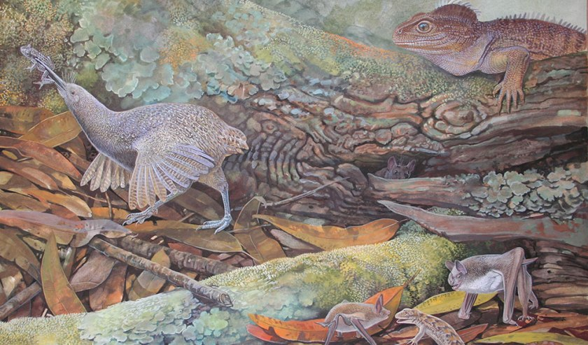 Peter Schouten's Proapteryx picture accompanied by more familiar kiwi (geddit) characters like a tuatara-like sphenodontian and mysticine bats.