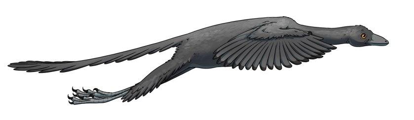 02-archaeopteryx-flight
