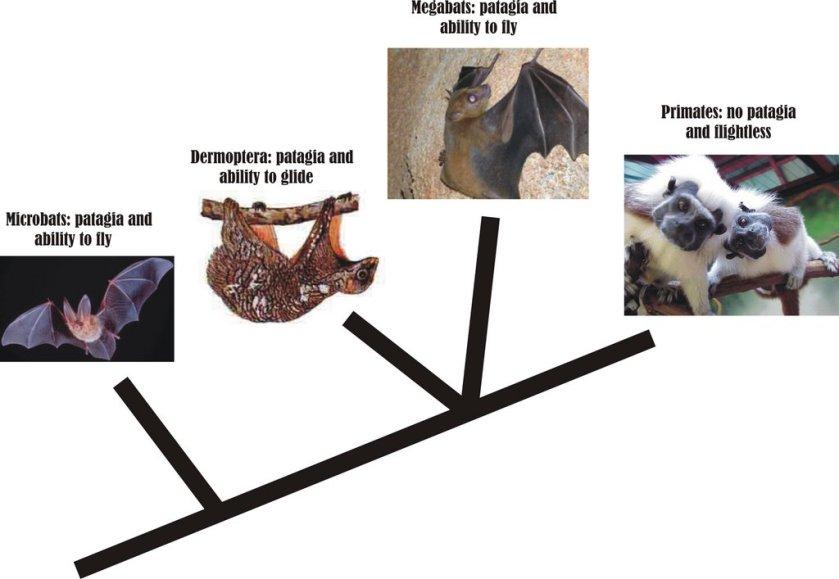 flightless primates2